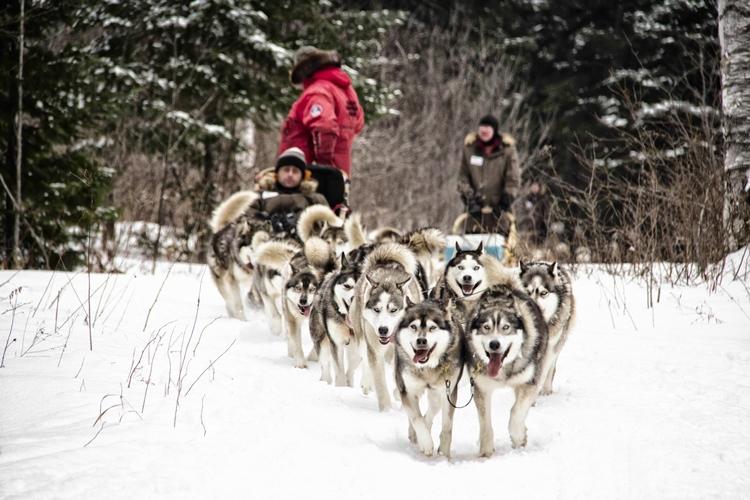Traîneau à chiens au Québec Appalaches